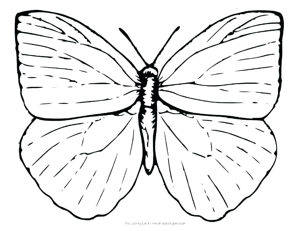 970x750 Monarch Butterfly Coloring Page