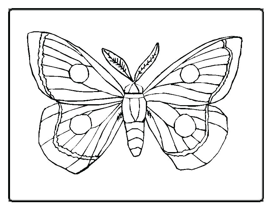 869x671 Coloring Pages Of Butterflies