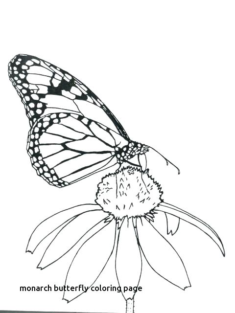 480x640 Monarch Butterfly Coloring Page