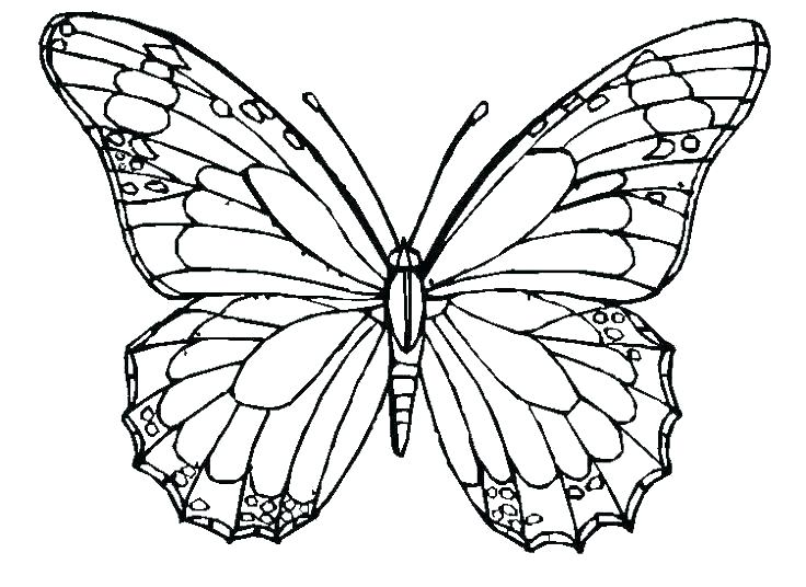736x536 Butterfly Coloring Pages Butterfly Printable Coloring Pages Cute