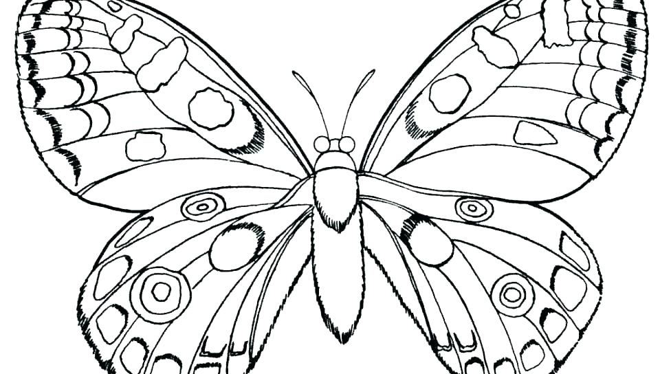 960x544 Butterfly Coloring Pages Color Page Butterfly Color Page Butterfly