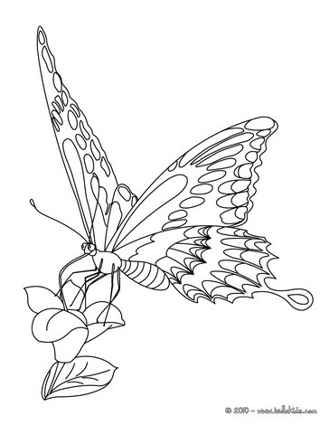 364x470 Butterfly Coloring Pages