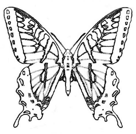 473x464 Image Result For Monarch Butterfly Wings Coloring Page Butterfly