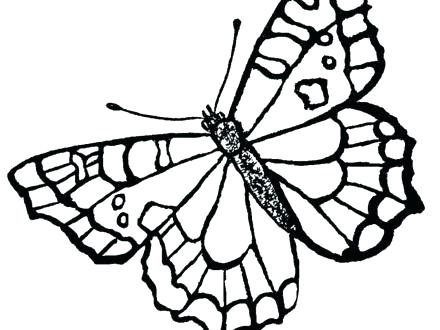 440x330 Life Cycle Of A Butterfly Coloring Page Monarch Butterfly Coloring