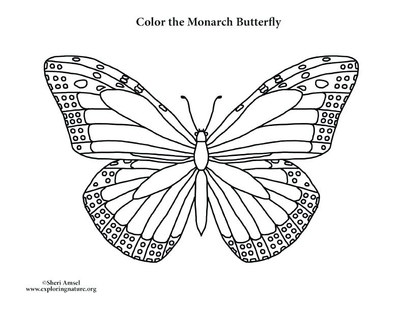 792x612 Monarch Butterfly Coloring Page
