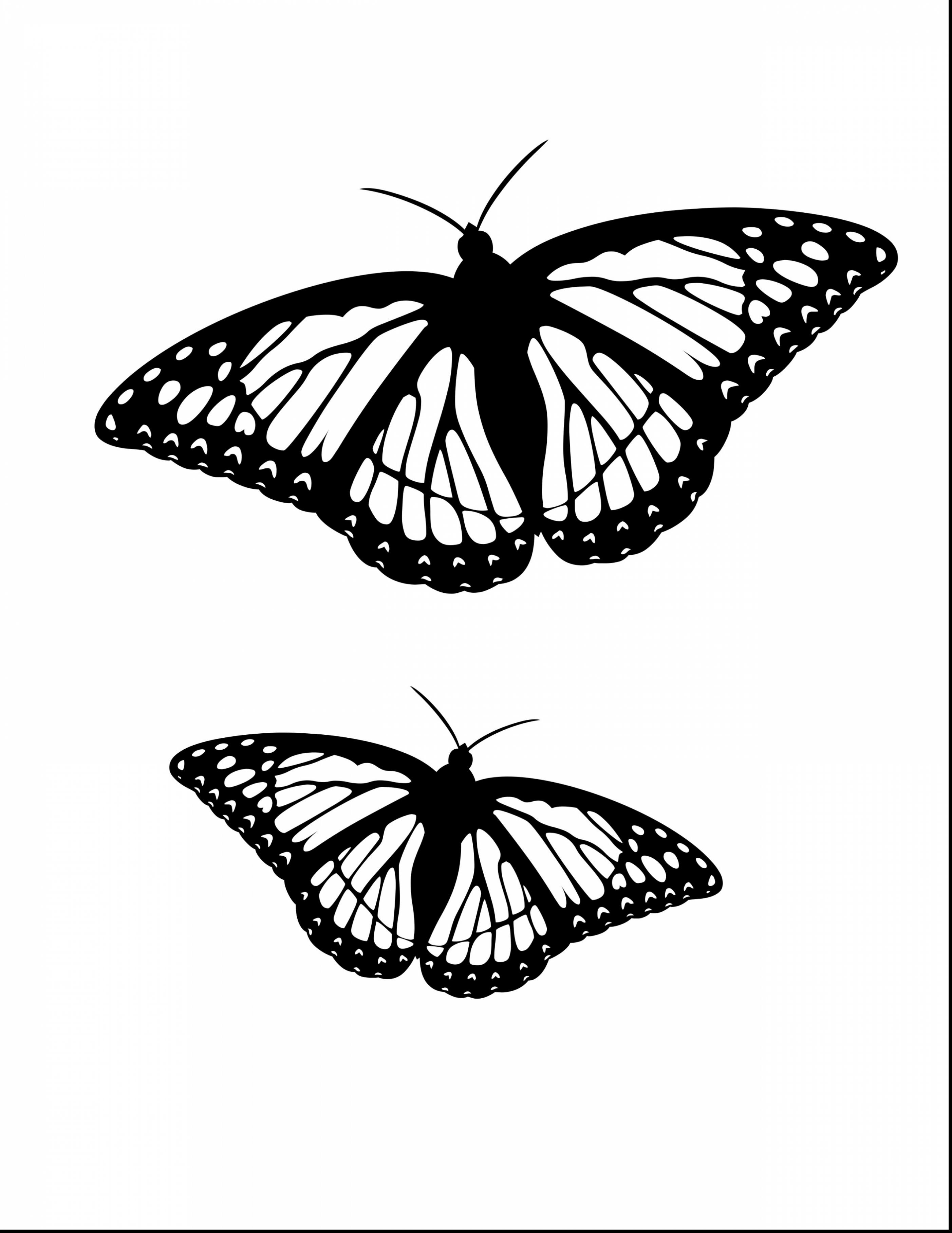 2805x3630 Bargain Monarch Butterfly Coloring Sheet Free