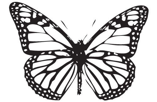 500x325 Monarch Butterfly Coloring Pages Mesmerizing Monarch Butterfly