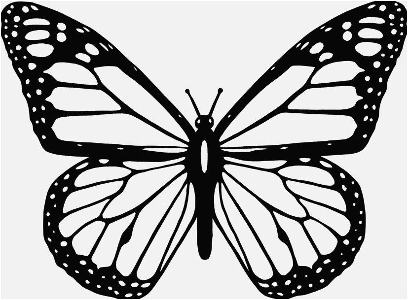 827x609 Printable Butterfly Coloring Pages Photographs Selected Coloring