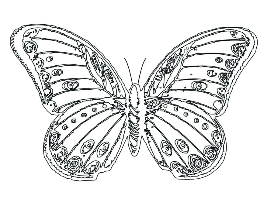 878x678 Wonderful Monarch Coloring Page Coloring Full Size Of Pictures