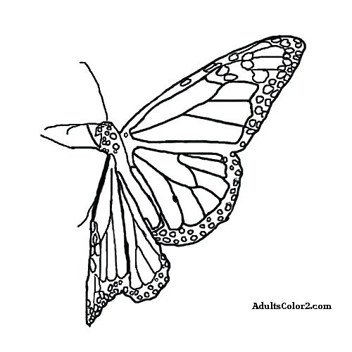 500x500 Free Printable Monarch Butterfly Coloring Pages
