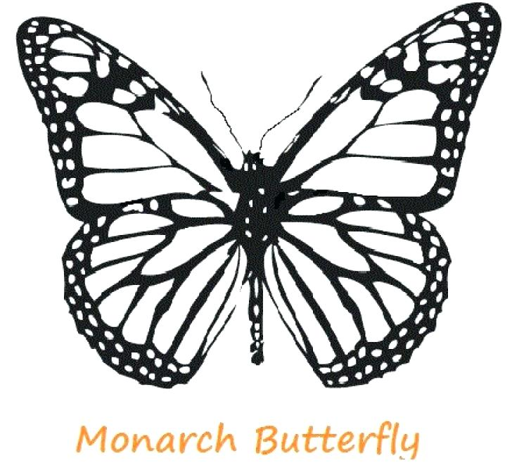 728x668 Color Page Butterfly Monarch Butterfly Coloring Pages Free Color