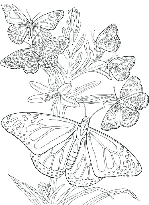 523x720 Coloring Page Of Butterfly Detailed Coloring Page Butterflies