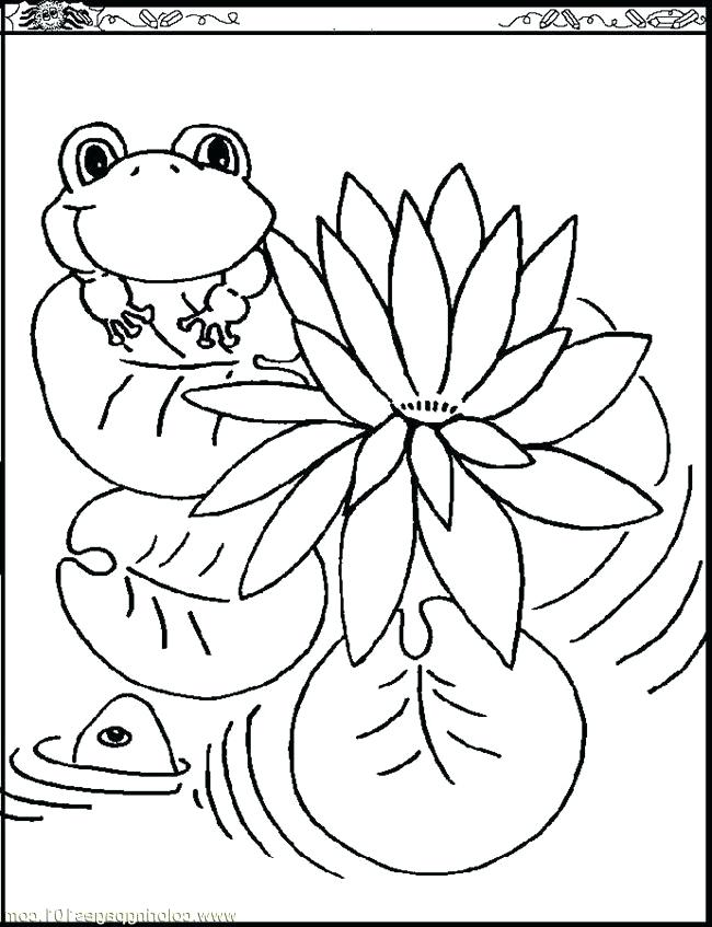 650x847 Monet Coloring Pages Water Lily Coloring Pages Images Pictures