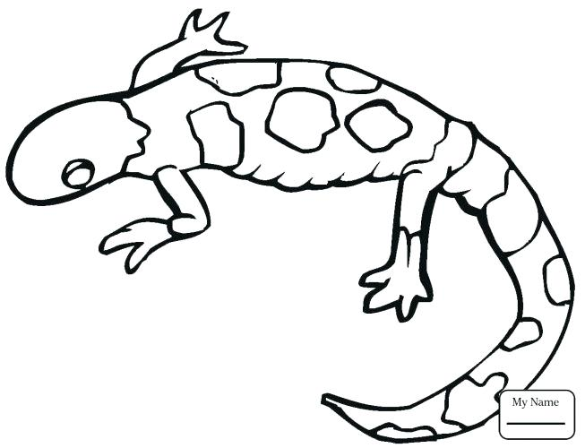 653x500 Monitor Lizard Coloring Pages Unique Lizards Kids Printable Great