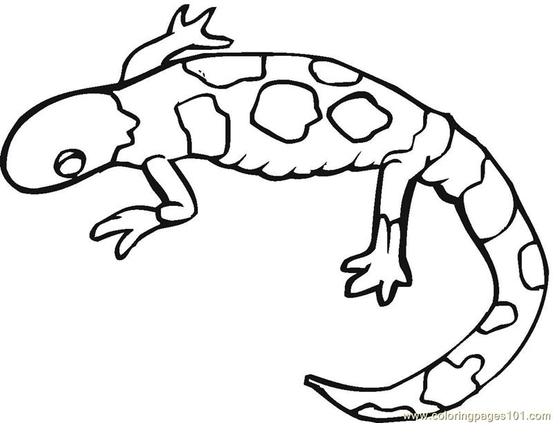 800x612 Monitor Lizard Coloring Pages Download And Print For Free