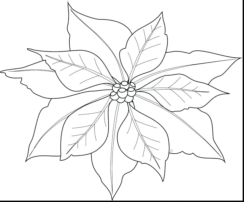 948x785 Poinsettia Coloring Page