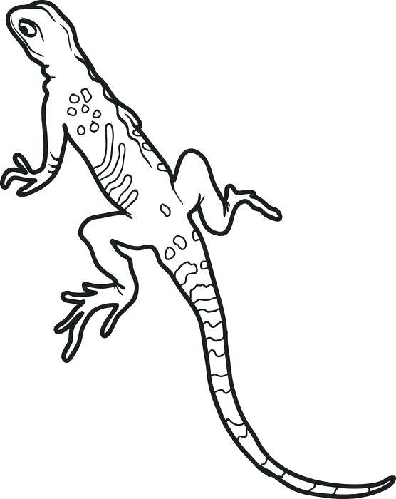 556x700 Lizards Coloring Pages Iguana Coloring Pages Click The Iguana