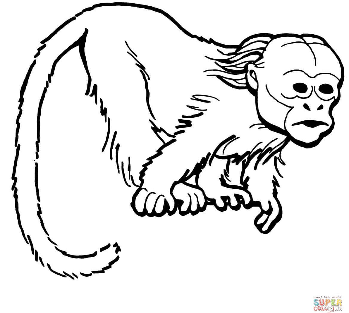 1168x1050 Mandrill Monkey Colorings For Kids Beautiful Baby Pigmy Marmoset