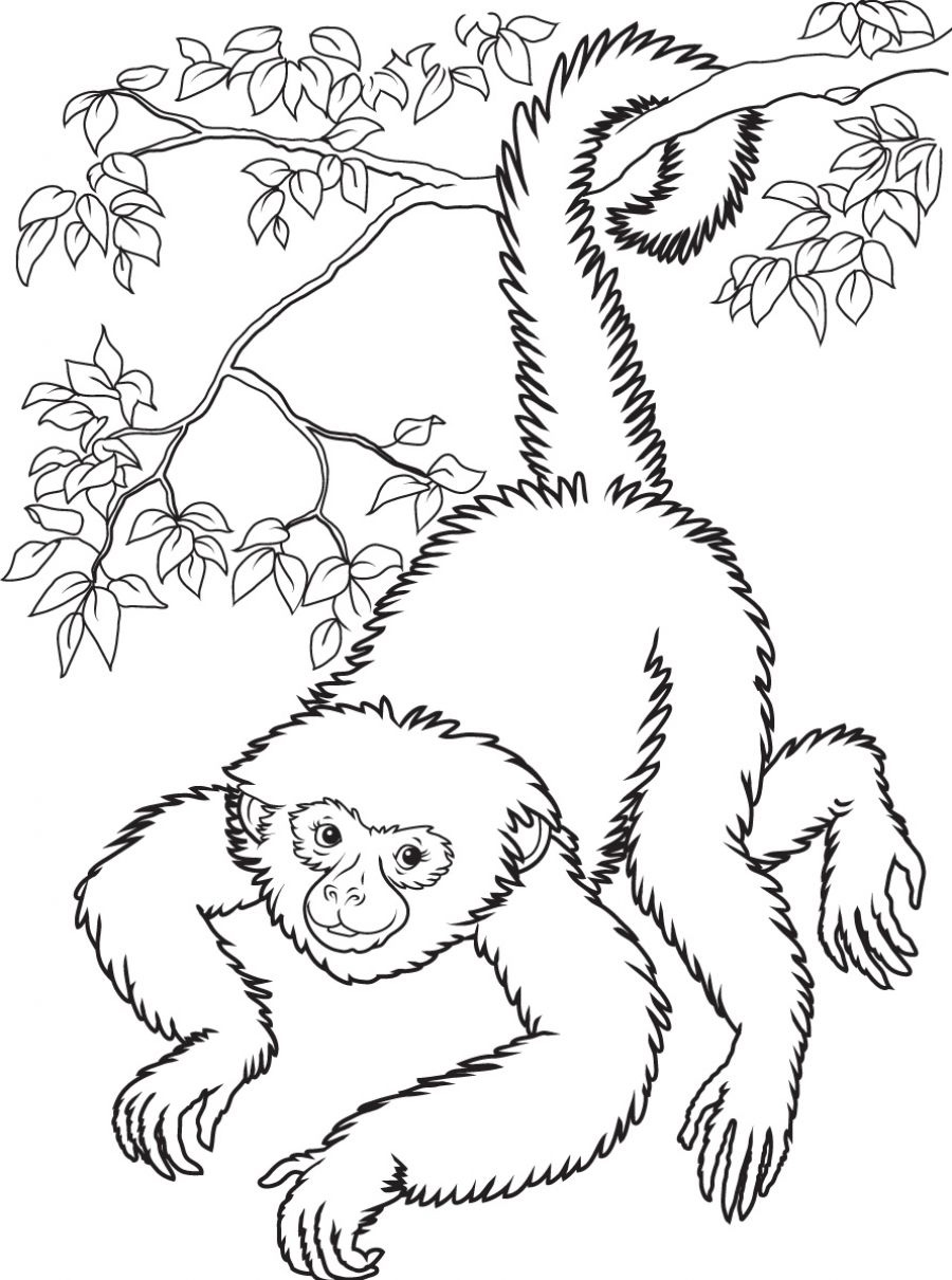 900x1210 Monkey Coloring Pages Printable