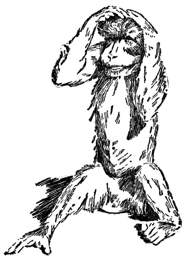 653x882 Monkey Coloring Pages