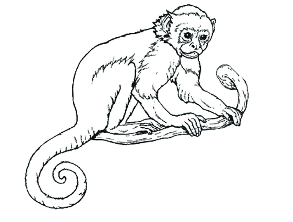 1000x760 Coloring Pages Monkeys Monkey Color Pages Coloring Pages