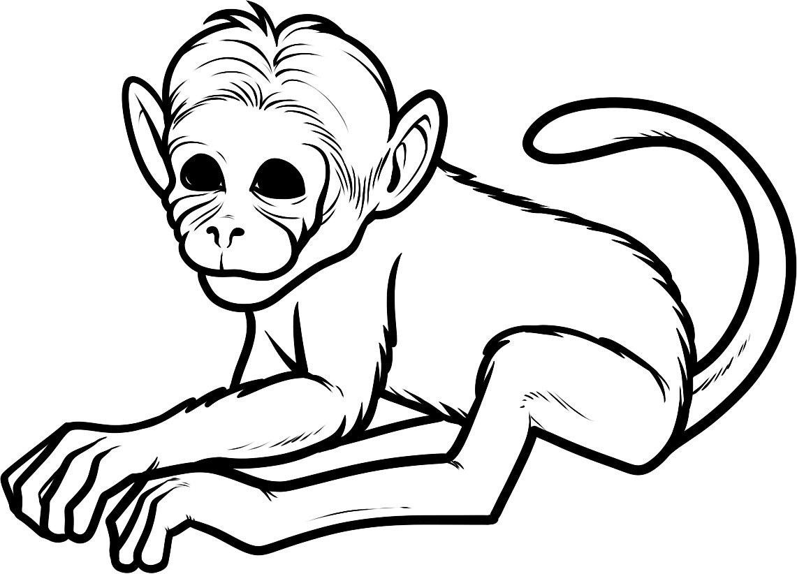 1141x822 Squirrel Monkey Coloring Pages Copy Free Printable Monkey Coloring