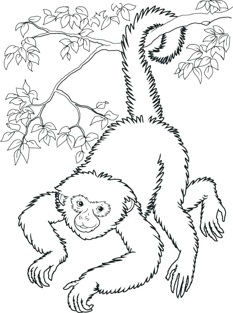 761x1024 Monkey Coloring Pages Printable Sock Monkey Coloring Pages Sock