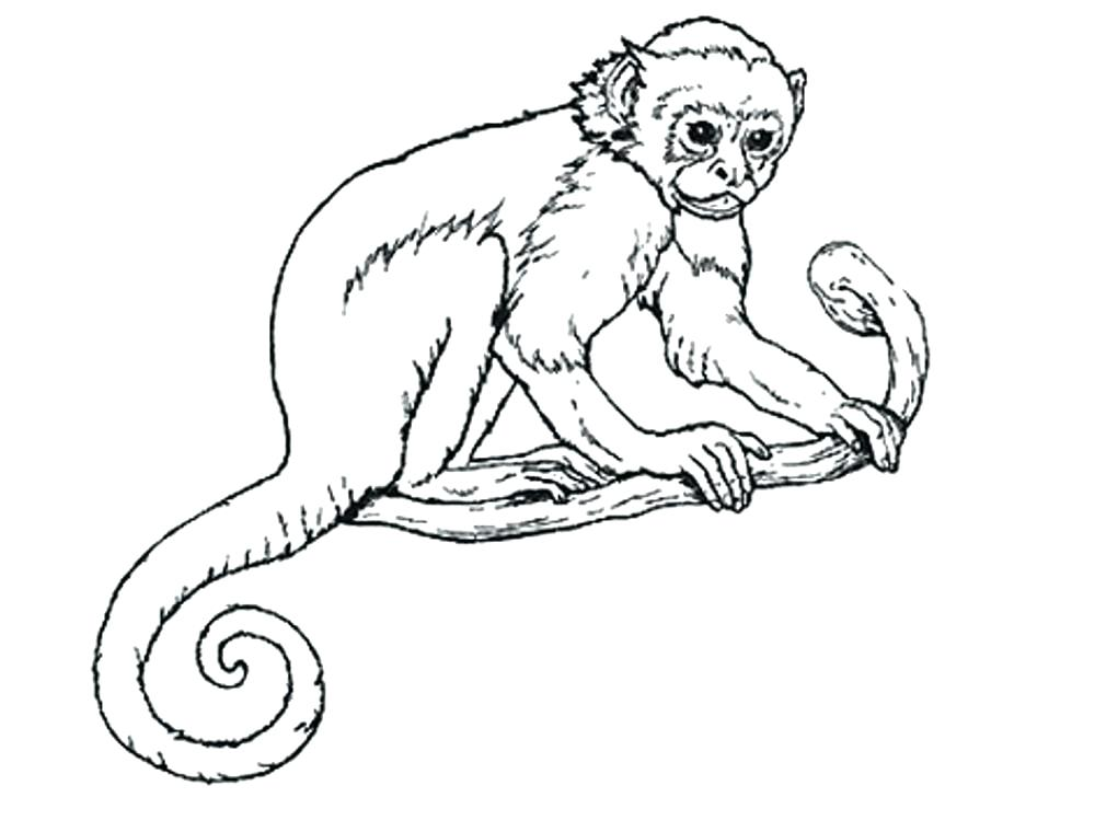1000x760 Monkey Coloring Pages Monkey Coloring Picture Gallery Of Coloring