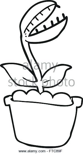 293x540 Fly Trap Black And White Stock Photos Images Freehand Drawn Black