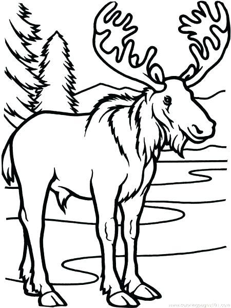 450x600 Elk Pictures To Color Moose Coloring Pages Printable Cow Elk Elk
