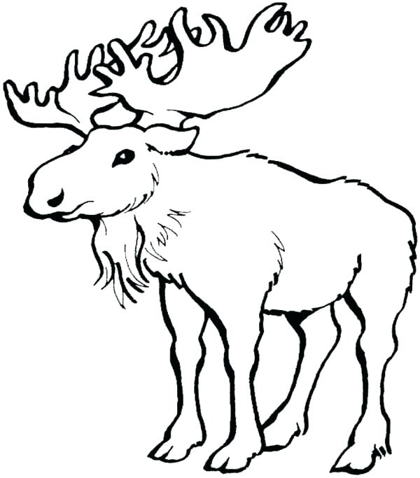 600x683 Moose Coloring Page