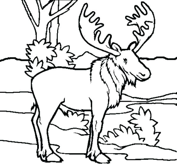 600x558 Moose Coloring Page Best Of Moose Coloring Pages Pictures Picture