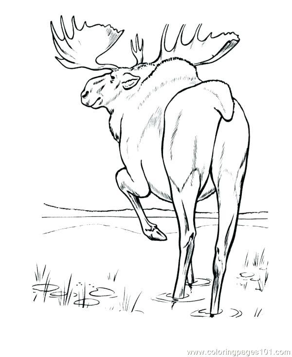 600x734 Moose Coloring Page Moose Coloring Pages Elk Coloring Page Moose