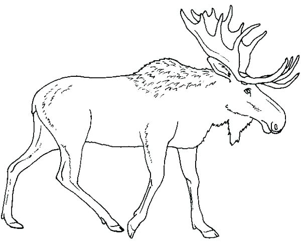 600x484 Moose Coloring Page Moose Coloring Pages Moose Coloring Sheet