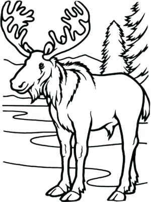 300x401 Moose Coloring Pages Moose Coloring Page Long Legged Moose