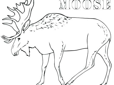 440x330 Moose Coloring Pages Moose Coloring Pages Moose Coloring Pages
