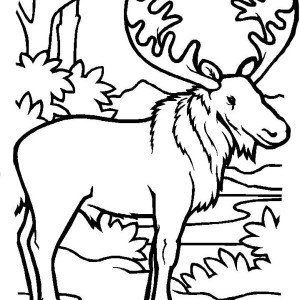300x300 Picture Of Moose Coloring Page Picture Of Moose Coloring Page