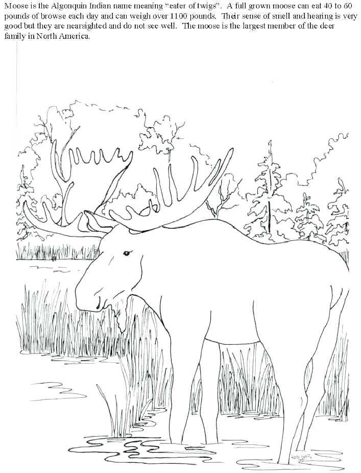 707x926 Coloring Pages Of Moose Elk Coloring Page Free Printable Elk