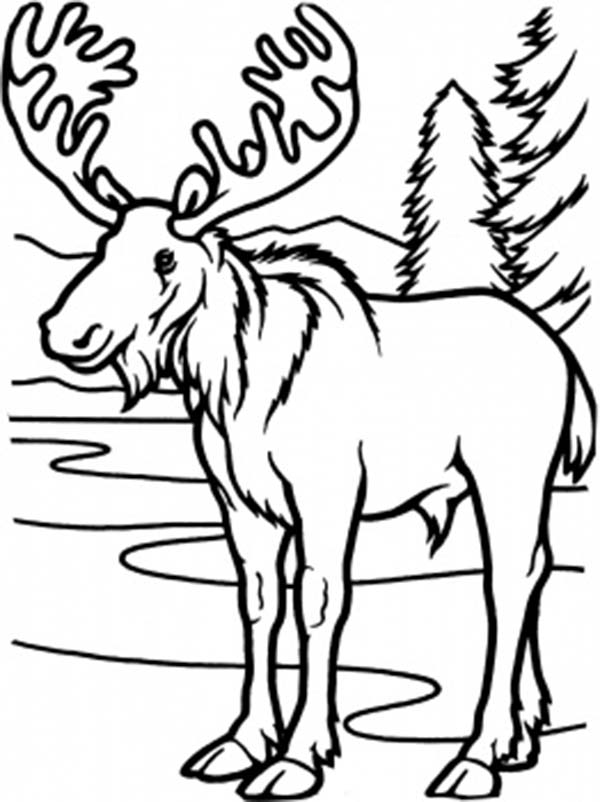 600x802 Cute Moose Coloring Pages