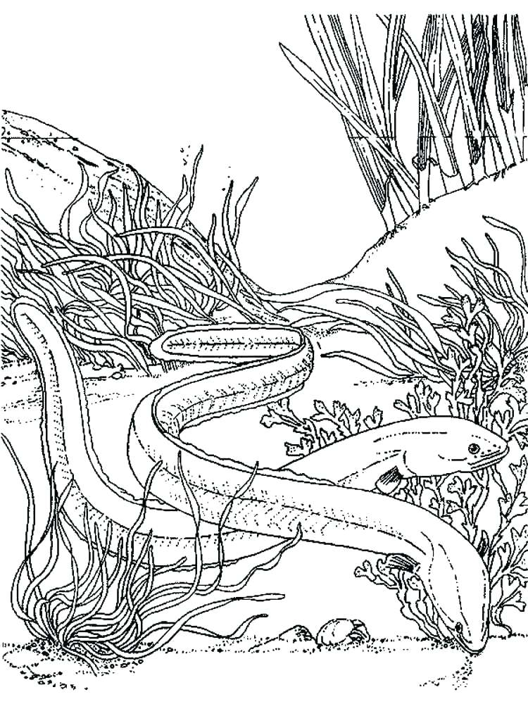 750x1000 Eels Coloring Pages Salmon Coloring Page Eels Coloring Pages