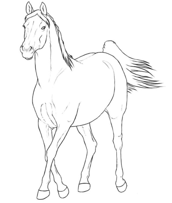 595x702 Kids N Coloring Pages Of Horse Breeds