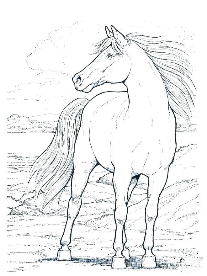 660x880 Unique Mustang Horse Coloring Pages Printable Frieze