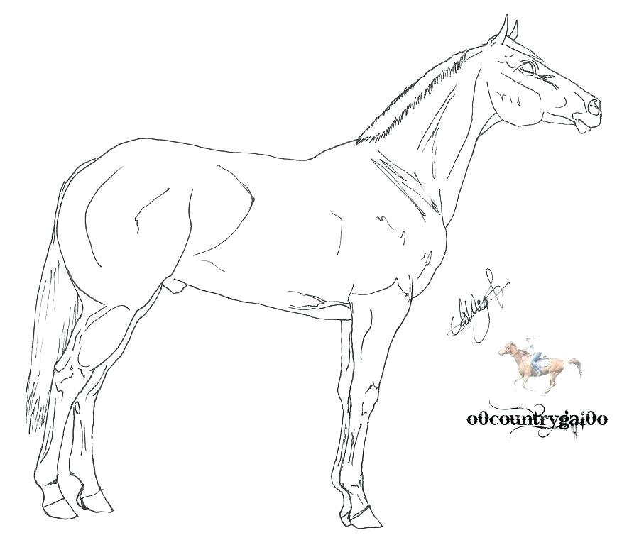 900x768 Morgan Horse Coloring Pages