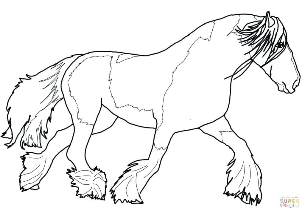 1024x713 Morgan Horse Coloring Pages