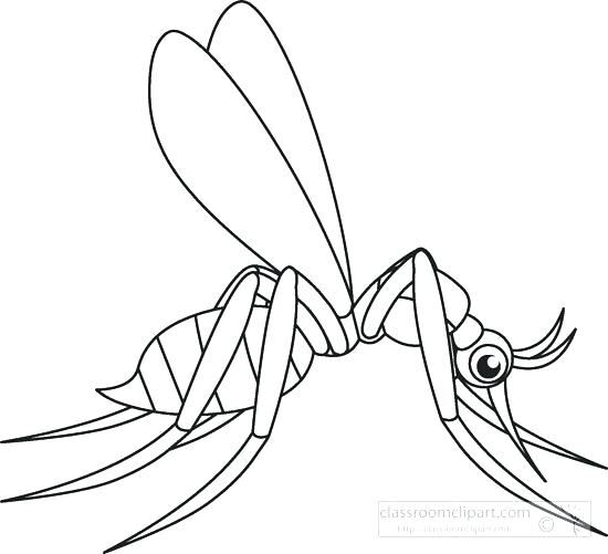 550x501 Mosquito Coloring Page Insect Coloring Page Coloring Pages Insects