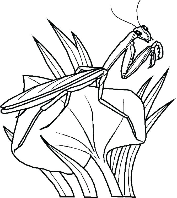 675x757 Mosquito Coloring Page Insect Mosquito Coloring Pages Printable