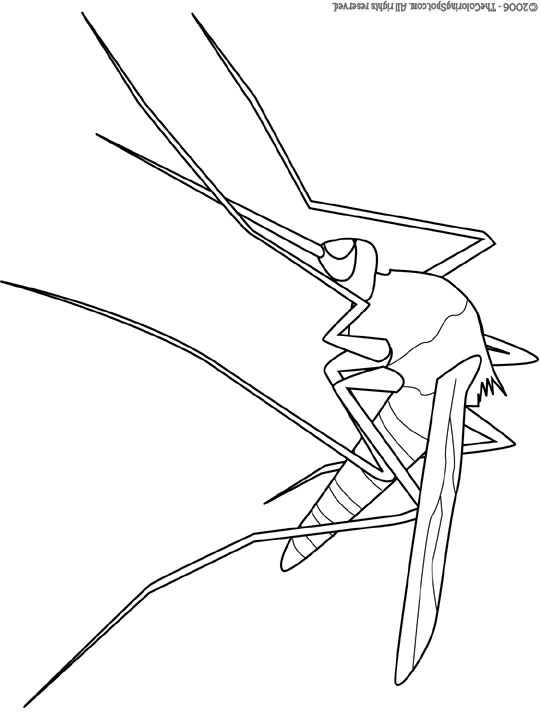 540x720 Mosquito Coloring Pages