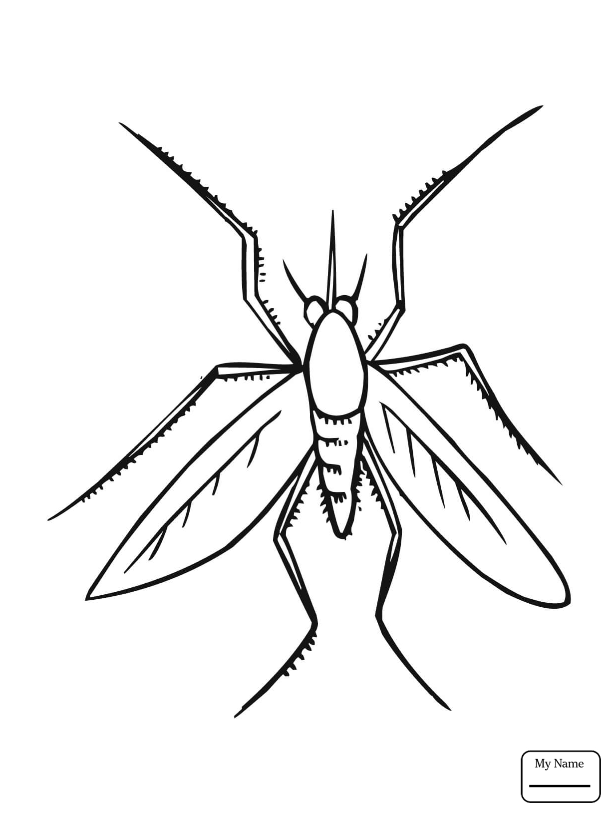 1224x1632 Coloring Pages Insects Mosquito Insect Com Inside
