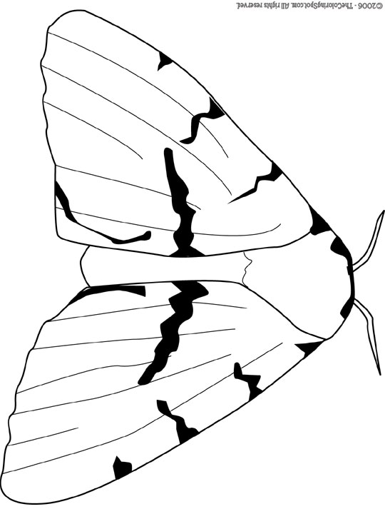 540x720 Gypsy Moth Audio Stories For Kids Free Coloring Pages