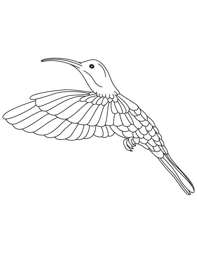 630x810 Hummingbird To Color Hummingbird Looking Moth Coloring Page Cute